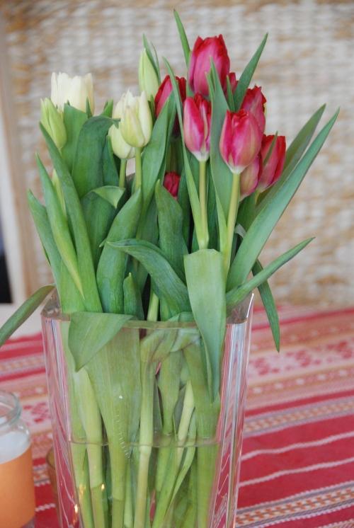 birthday tulips!