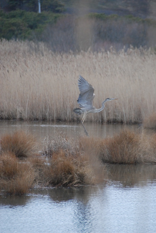crane in the marshland