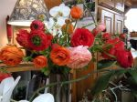 these gorgeous ranunculus from Trader Joe's will keep me company in my retreat!