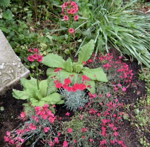 beautimous garden for blog post