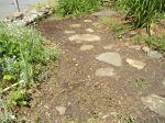 """""""Before"""" planting wildflower seeds"""