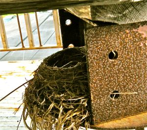 . . . nest built under the hibachi on the back deck