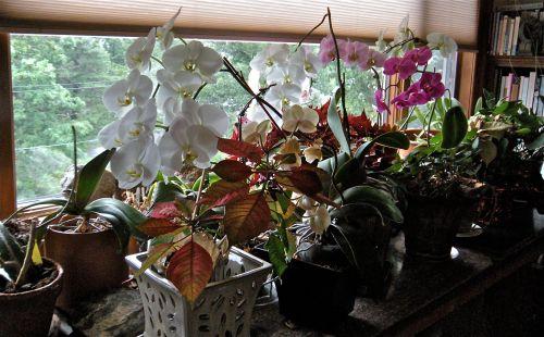 . . .  orchid plant shelf