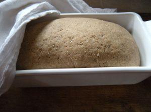 . . . rye bread dough rising