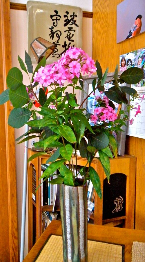 pink phlox from the garden. . .