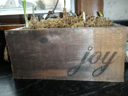 """Joy"" planter, a gift from C. last year with new growth . . ."