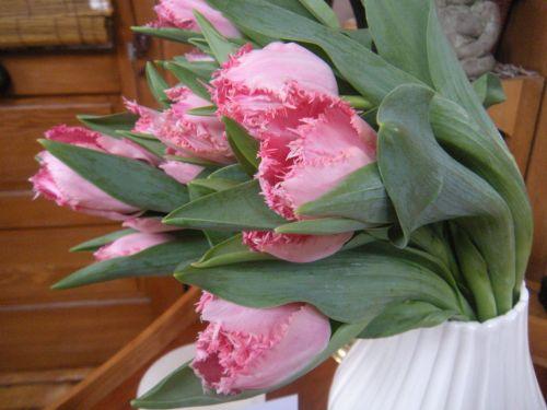 tulips 2 jpg
