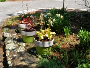 heuchera planters 2