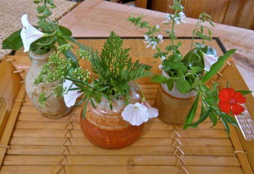 herbs in pots 2