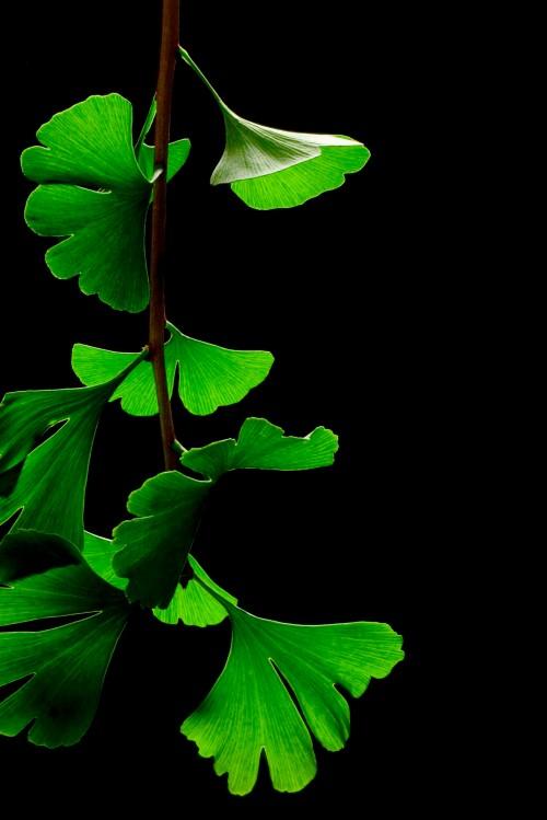 . . . a symbol of longevity*