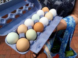 Noho eggs