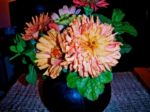 zinnias from the farmers' market in noho . . .