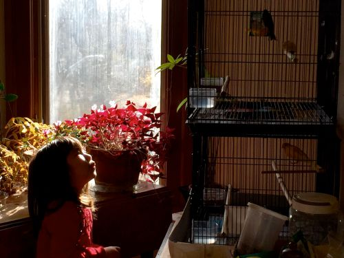 josie whistling with our canaries . . .