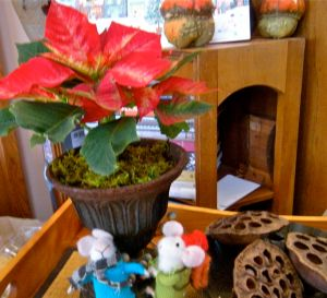 little poinsettia in iron urn