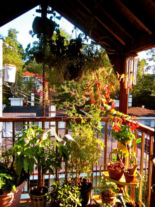 plantings on our back deck. . .